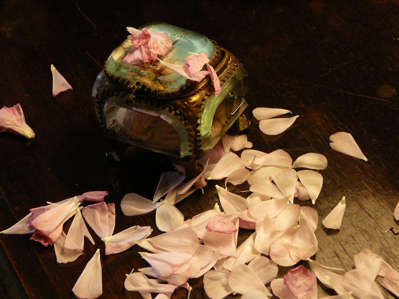 Valediction Forbidding Mourning Petals photo