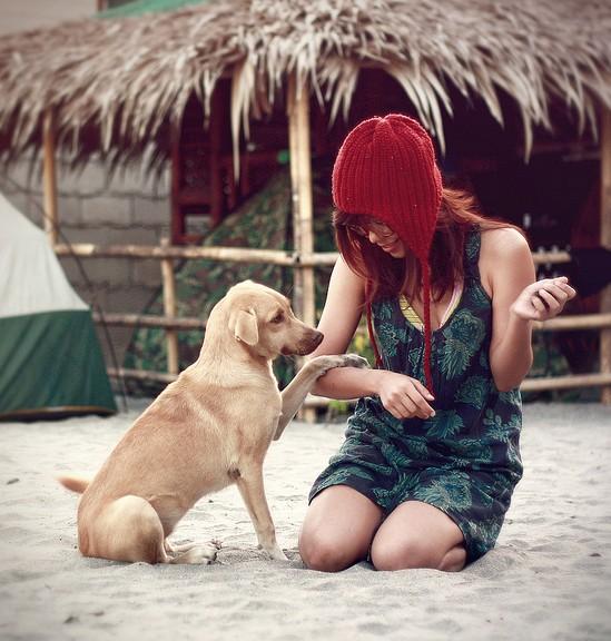 Dog on beach TSP