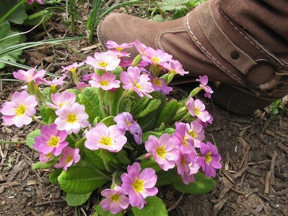 Cowboy Boot Central Park Flowers
