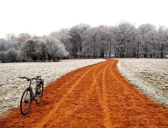 TSP Snowy Woods Robert Frost