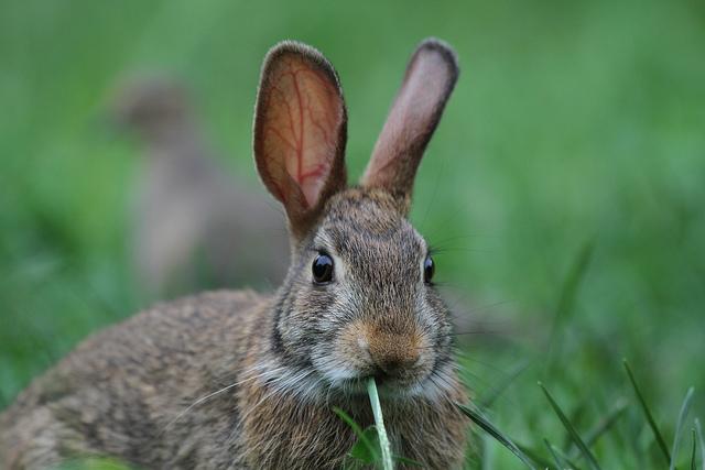 children's books peter rabbit