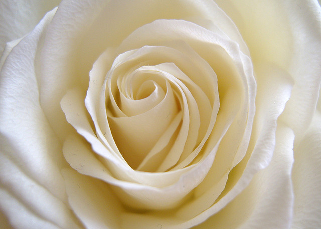 top 10 rose poems