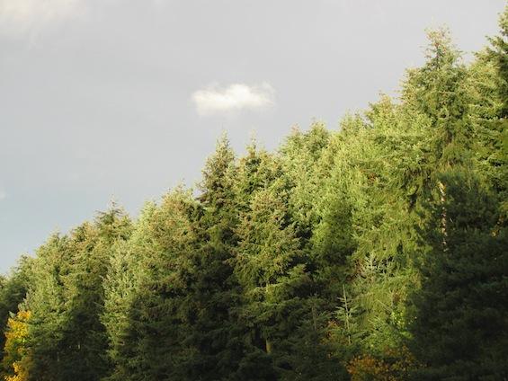 Washington Evergreens