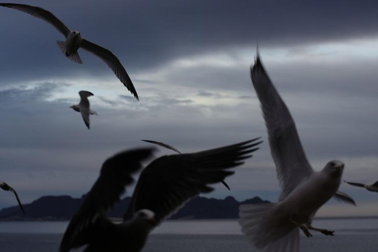 Heroes and Villains Dark Gulls