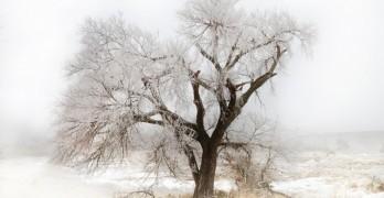 Top 10 Winter Poems
