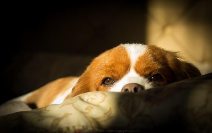 doggie_dreams