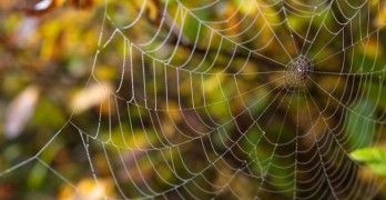 A Noiseless Patient Spider by Walt Whitman Coloring Page Poem