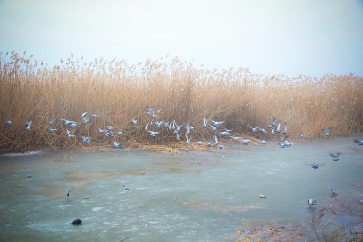 Birds by stream - poetry of biking trail