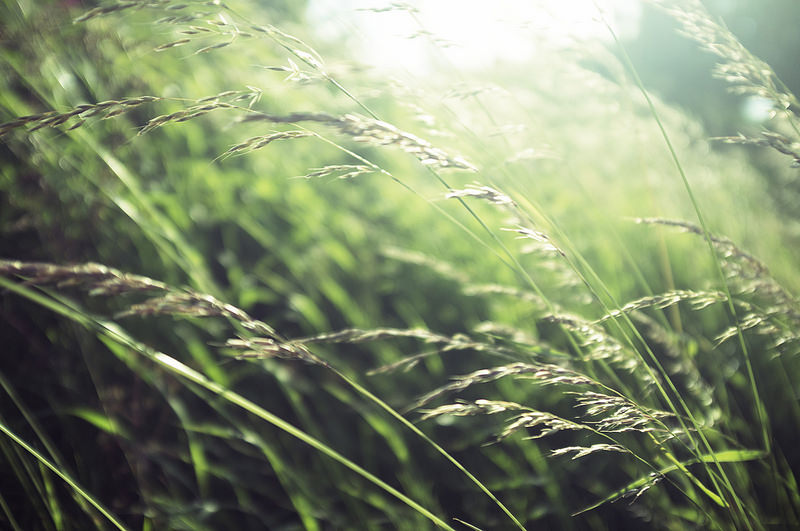 grasses - A Mistake Becomes a Discovery: John Holmes