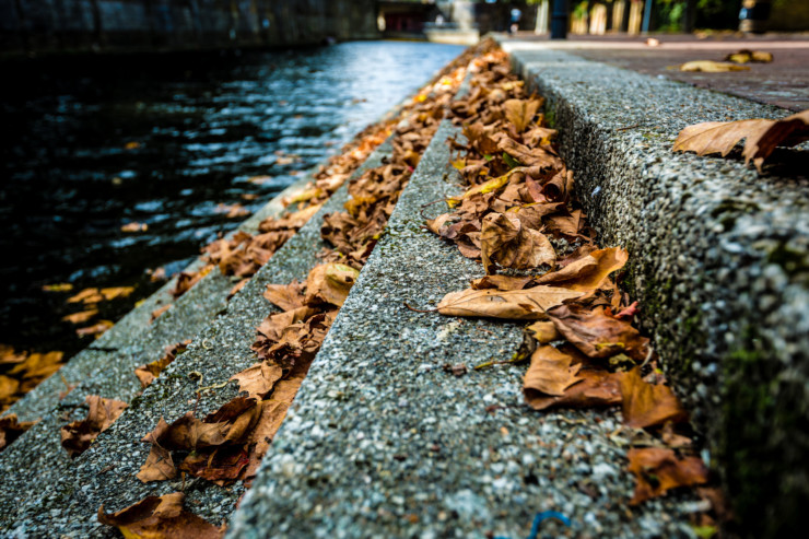 In search of the Best American Essays - fall leaves on stone steps