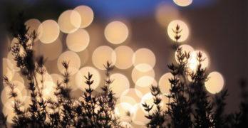 Lights in Field William Wordsworth
