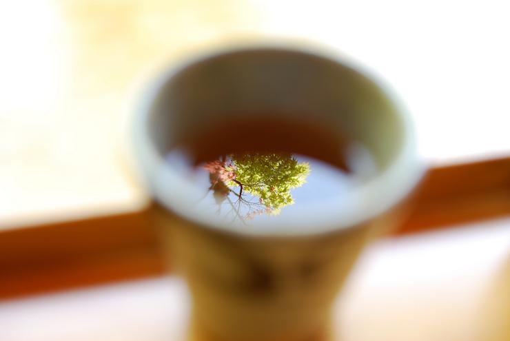 Tree in Tea Comfort