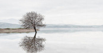 Tree reflection Don Paterson