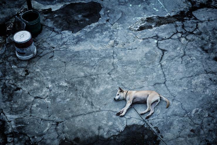 Dog on broken ground Matthew Duggan Dystopia