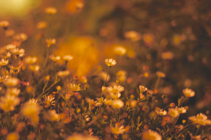 happiest-moment-fall-flowers