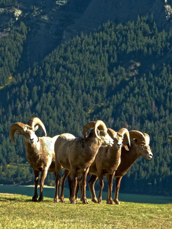 high-tea-at-waterton-glacier-international-peace-park-8