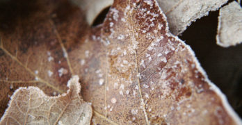 Frosty leaves Poetic Voices Lewis Wheeler