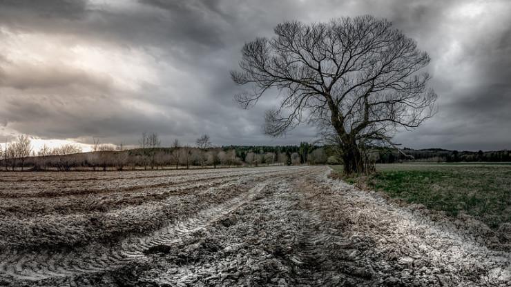 Tree in field Armitage Pearl