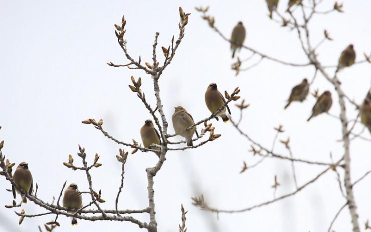 Bird in Tree Max Porter