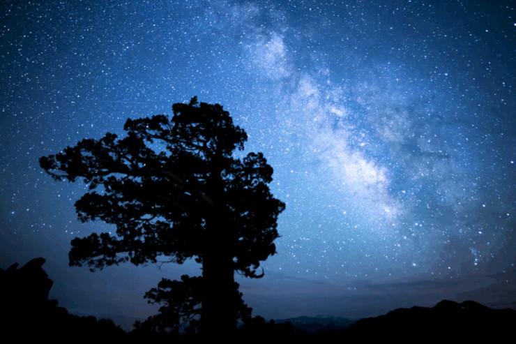 Tree and sky Jack Gilbert Refusing Heaven