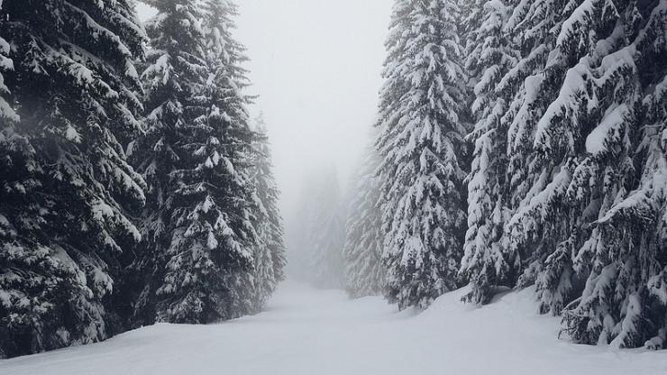 Trees in snow Floodgate chapbooks