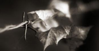 Leaf on barbed wire Darren Demaree