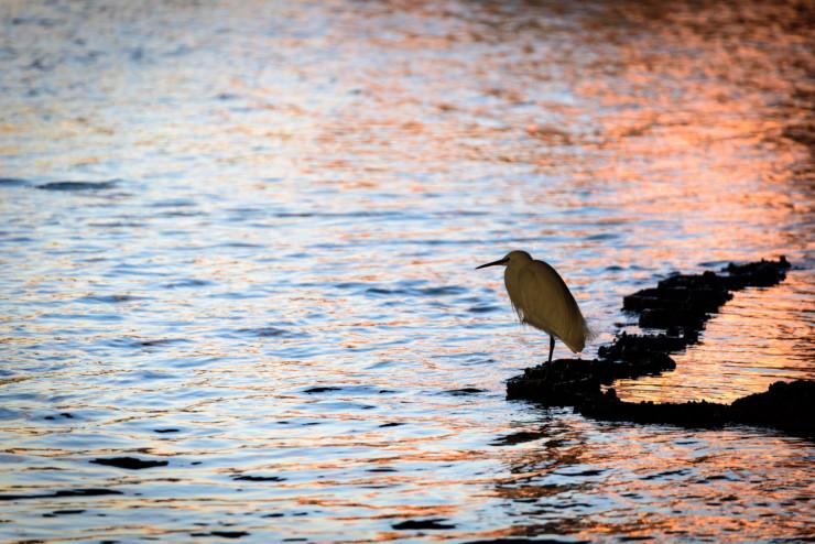 Tanka Prompt Egret