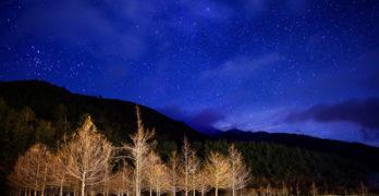 Trees at Night Sofia Starnes
