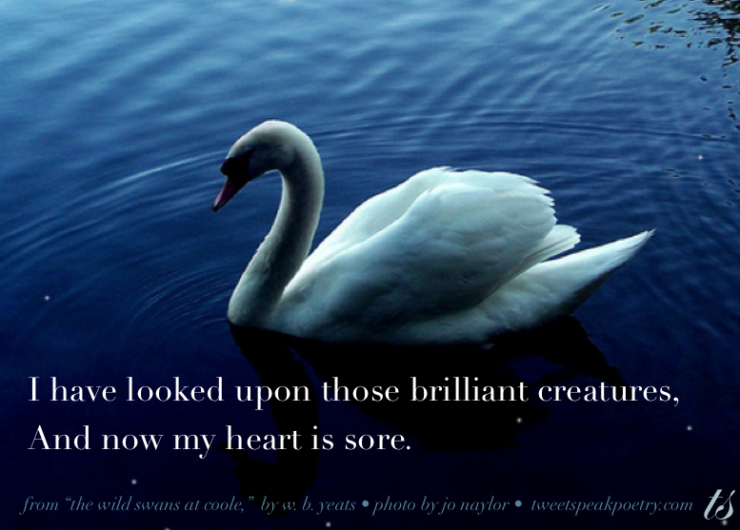 I have looked upon those brillian creatures wb yeats quote on photo