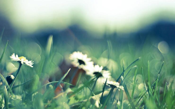 Wildflowers Braiding Sweetgrass