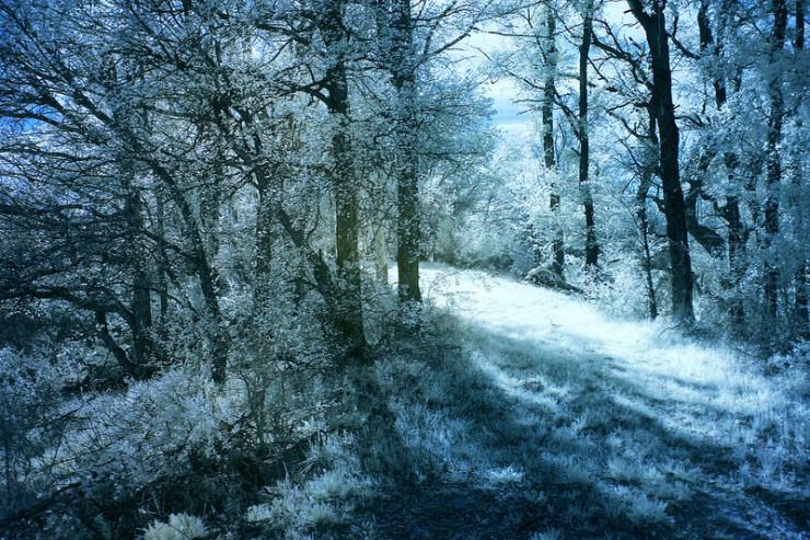 Forest Robert Graves