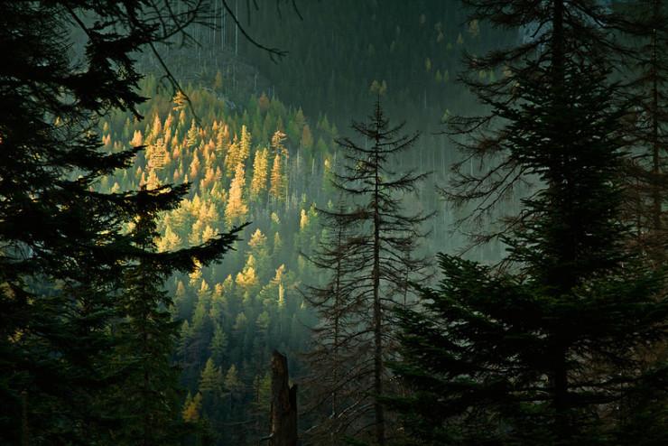 Forest Phoebe Power Shrines of Upper Austria