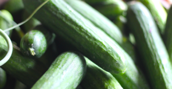 Farmacology farmers market cucumbers