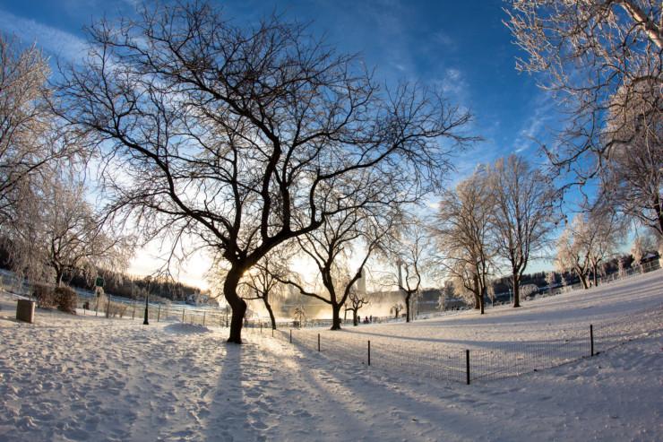 Frozen trees in snow