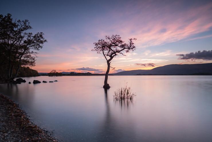 Tree in lake Lababidi aphorisms