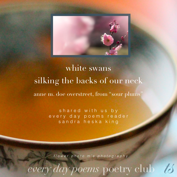 white swans poetry club