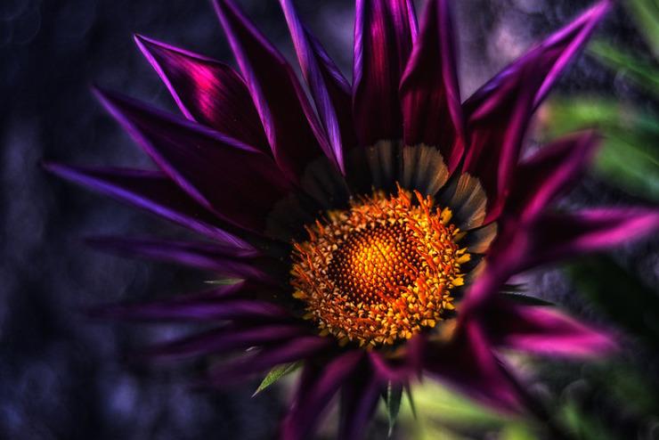 Winter Stars dark flower