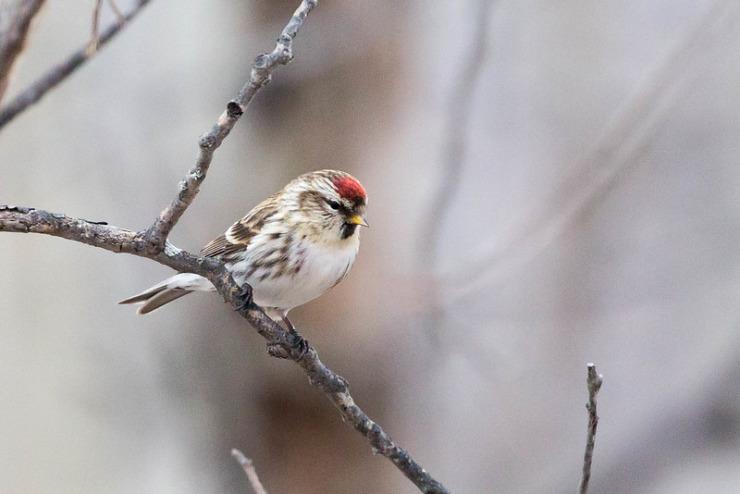 Bird in wintry tree