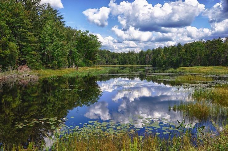 Adirondacks Lake and Pine Trees Poetry Prompt