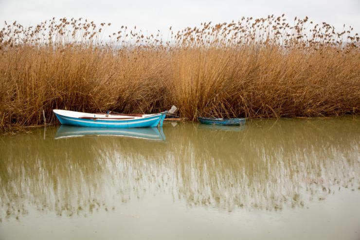 blue boat beside reeds in water