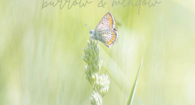 Greetings From Burrow & Meadow postcard