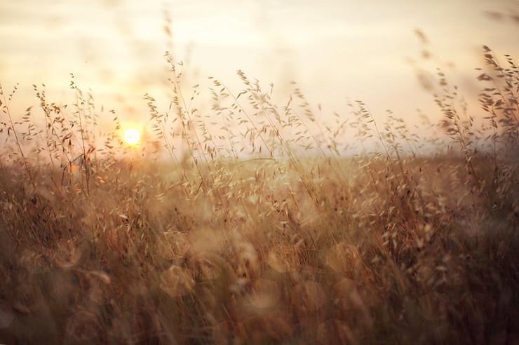 Gold Wheat Provence France-Mrs. Goldwasser teacher poem
