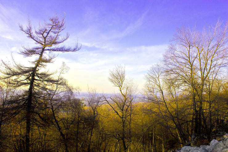 Bare trees with purple mountains